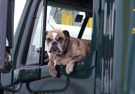 Половина американцев не тревожится обезопасности собак вмашине